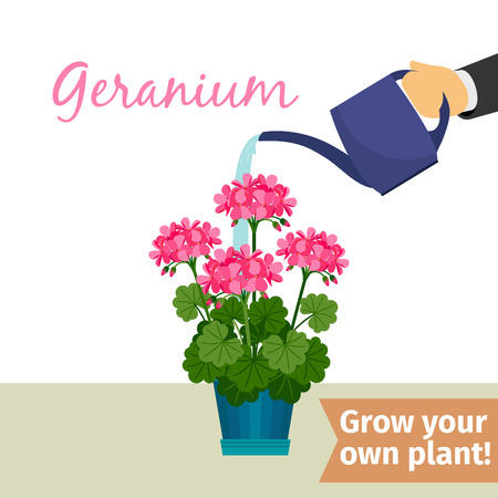 Hand watering geranuim plant Vectores
