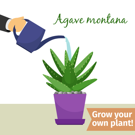 Hand watering agave plant illustration Illustration