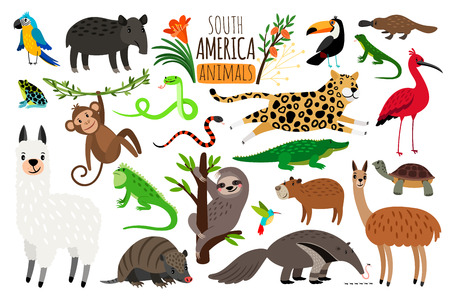 South America animals. Vector cartoon guanaco and iguana, anteater and ocelot, tapir and armadillo isolated on white background Illustration