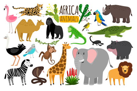 Various wildlife animals of Africa, vector monkey or marmoset and leopard, parrot and rhinoceros. Illustration
