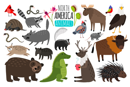 Animal graphics of North America, american bison and skunk, cute moose and lynx.