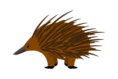 Cute vector echidna character on white background. Illustration
