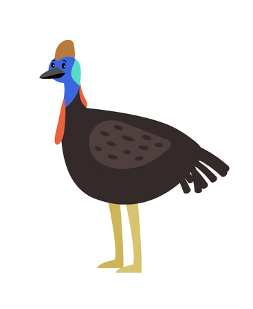 Cassowary cute cartoon bird