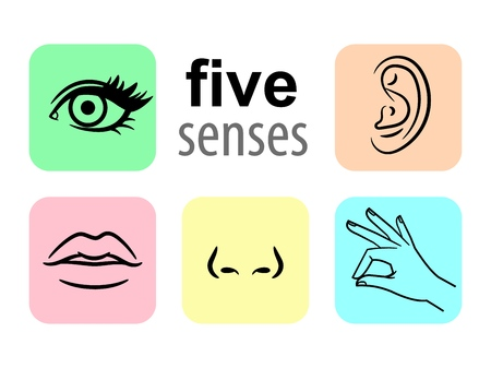 Senses icons. Five human illustrative senses vector illustration, taste and smell or nose sights