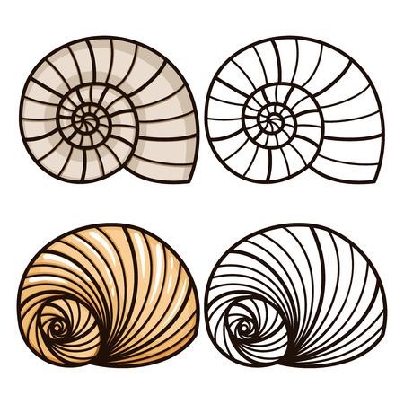Conchas de mar de dibujos animados y contorno