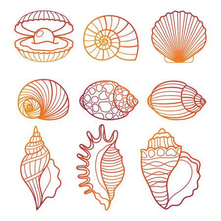 Colorful outline seashell set vector illustration