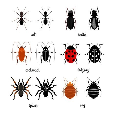 Crawling insects vector set - ant, spider, ladybug. Illustration of insect ladybug, cockroach and crawling insect