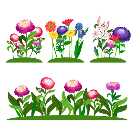 Garden flowers vector composition. Peony, lilly, daisy with green leaves. Illustration of colored flower in field
