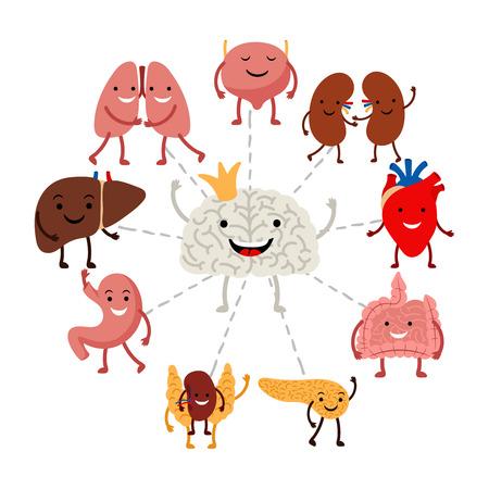 Brain controls internal human organs vector concept. Illustration of brain organ, internal control healthcare