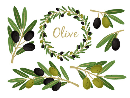 Olives branches and olive crown. Greek olives branch and wreath set, summer oil food tree twigs and leaves vector illustration Illustration