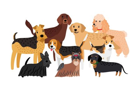 Group of hunting dogs breeds vector illustration. Cartoon character pets isolated on white background