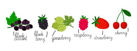 Popular berries isolated on white background. Hand drawn berries vector illustration. Berry fruitf, sweet ripe blueberry and dessert