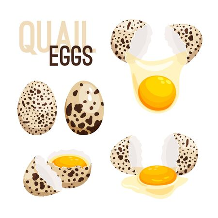 Quail eggs, whole and broken vector illustration. Eggshell and raw product, breakfast fresh Ilustração