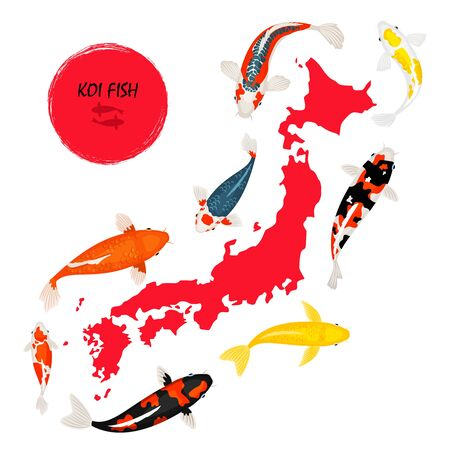 Koi fish and map of Japan on white background, vector illustration  イラスト・ベクター素材