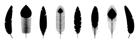 Black feathers silhouettes. Vector feathers icons isolated on white background