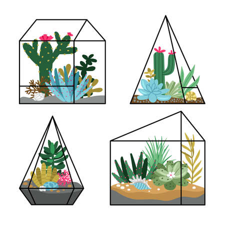Floral terrariums planting. Cartoon gardens with succulents and cactuses, hand drawn cute nature in geometric terrariums, vector illustration concept of gardening isolated on white