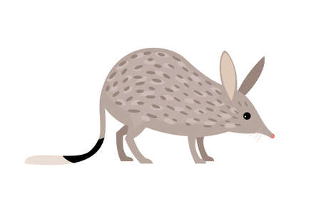 Rabbit Bandicoots. Cartoon zoo character, wild australian rodent, funny small cute nature pet, vector illustration of bilby isolated on white background