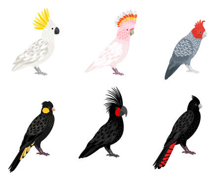 Parrots cockatoo. Cartoon tropical winged birds, parakeets with beaks and colored feathers, vector illustration of budgerigars of jungle isolated on white background Vektorové ilustrace
