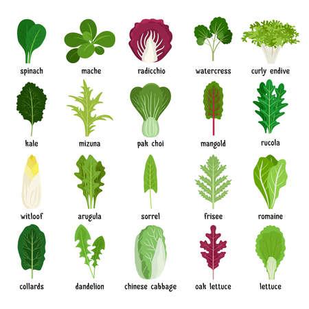 Green salad leaves. Vector vegetarian healthy food leaf set isolated on white background Vektoros illusztráció