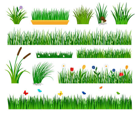 Growing grass template for garden vector. Gardener section and boxes with flowers, bulrush and sedge bushes isolated on white