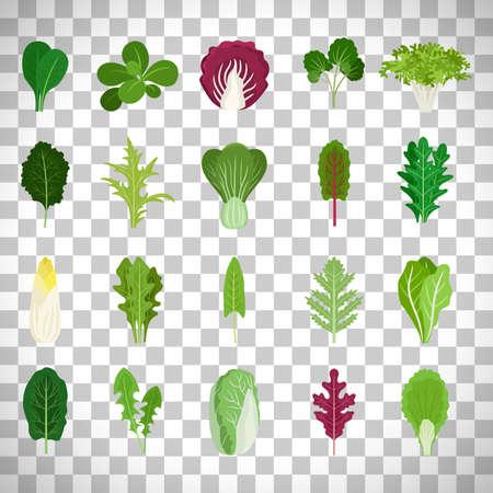 Green salad leaves on transparent background
