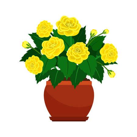 Begonia house plant in flower pot Vektorové ilustrace