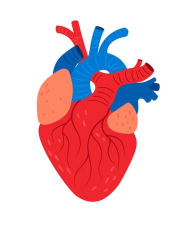 Anatomical heart cartoon icon Vettoriali