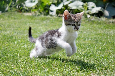 Kitten in grass photo