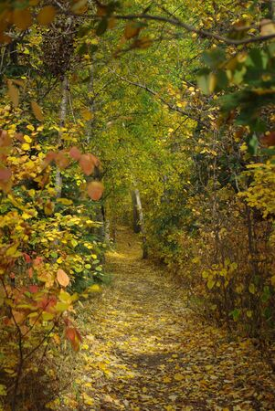 walking path: Fall walking path