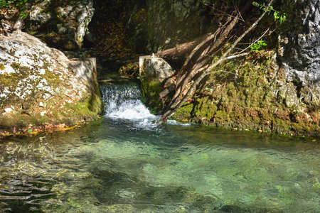 stream in the southern forest, mountain stream Banque d'images