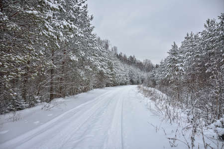 snow-covered road among winter forest, winter road, winter forest