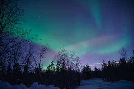 northern lights (aurora) in the winter forest