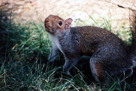 Squirrel looking annoyed. Banco de Imagens - 357637