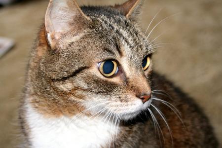 これは、猫は人 写真素材