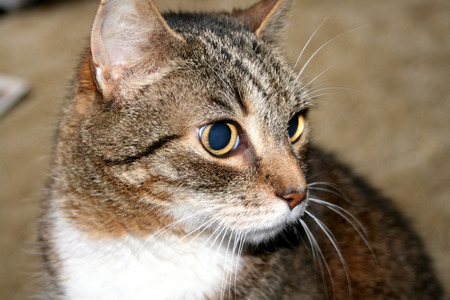 captivated: Who That Cat