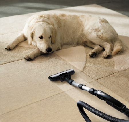 clean carpet: the dog lies on the beige carpet and looks at vacuum cleaner Stock Photo