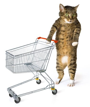 drollery: consumer cat with shopping cart on white background