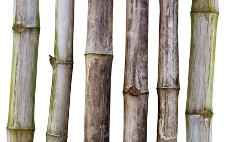 ramshackle: Dry stalks of bamboo on white background with path