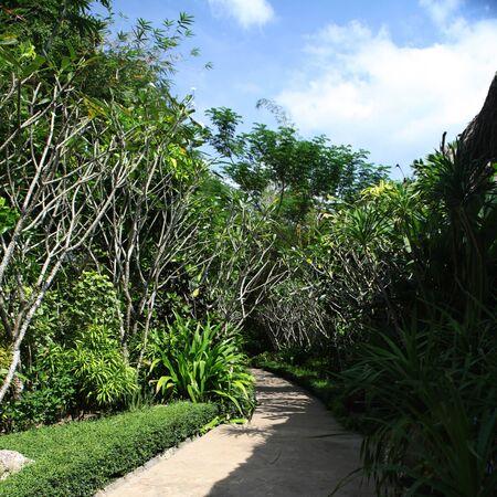 tropics: green tropics in sun day of Thailand Stock Photo