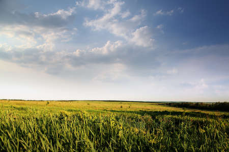 donbass: green field of summer grass and cloudy sky Stock Photo