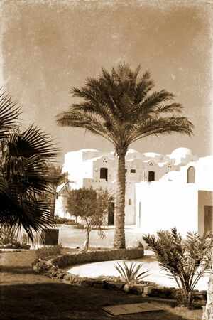 retro photo, on which image of three palm trees near white structure in Egypt Stock Photo