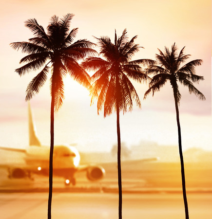 silhouette of palm trees near airport in light at sunset
