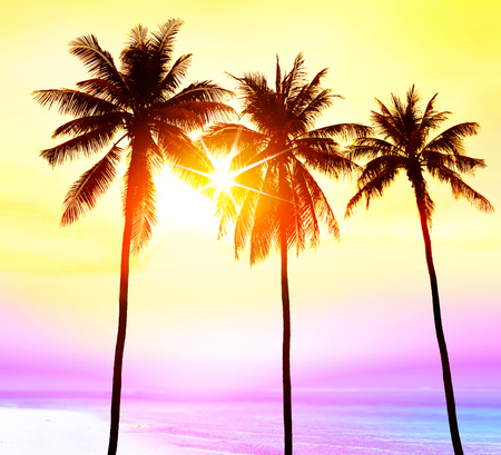 silhouette of palm trees on beach in light at sunset, paradise for travelers Stockfoto