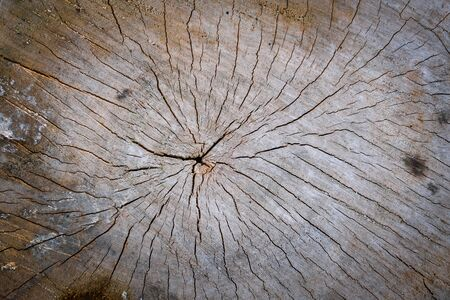 texture of old weathered and cracked tree stump. Closeup view