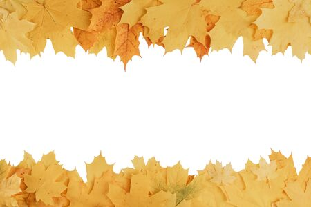 frame composed of yellow and orange autumn leaves isolated on white background Imagens