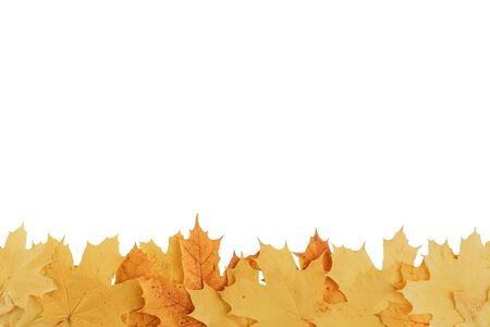composition of yellow and orange autumn leaves isolated on white background