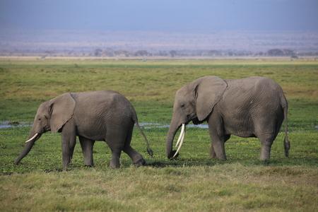 amboseli: Kenya, Amboseli National Park