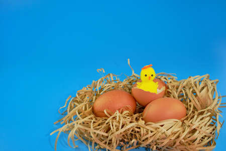 A happy Easter chicken sits on an eggshell, two eggs next to it. Easter nest made of straw. Easter blue background. Place to copy. Imagens
