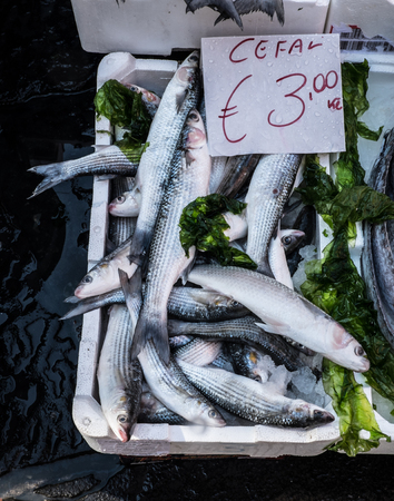 grey mullet: mediterranean fish in market in Naples, Italy