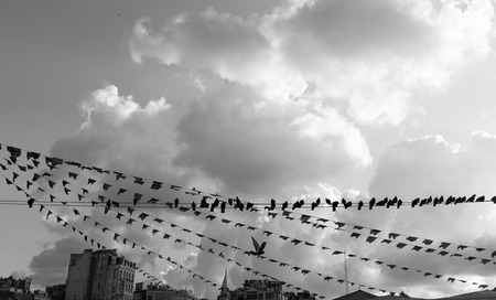 birds on a wire: Birds hanging on a wire, Istambul